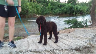 Jezzy as a pup at river
