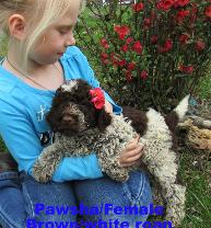 granddaughter, Charlie and Pawsha/female Porti-doodle