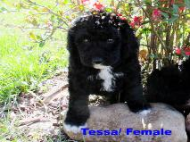 Tessa/ Female